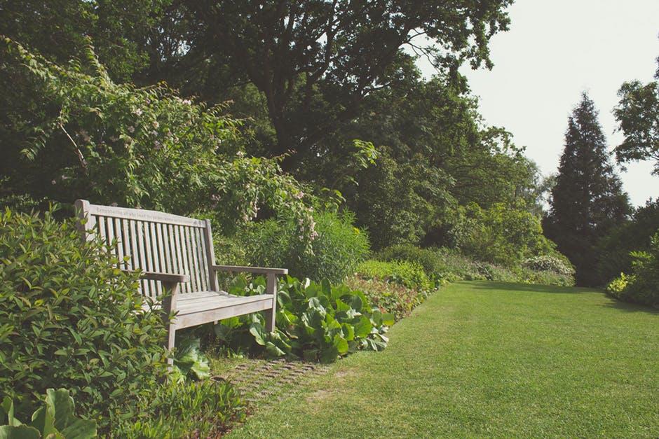 szkodniki w ogrodzie